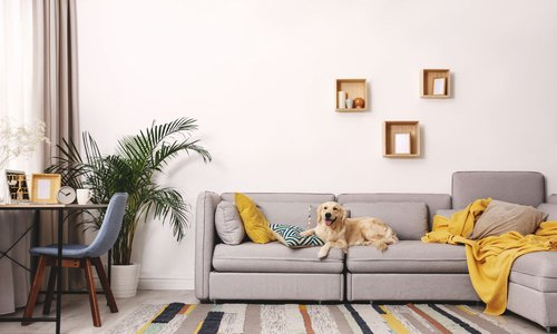 A fluffy golden dog lays on a grey sofa in a modern living room