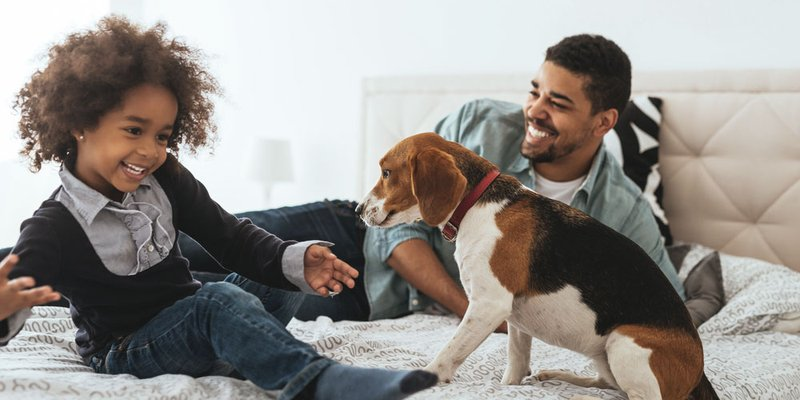 A beagle puppy jumps up on the bed with a dad and his stylish young son