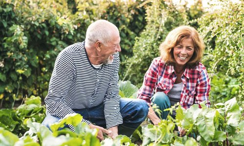 An older couple laugh as they garden together